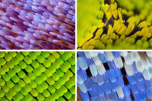 カラフルで美しすぎる!蝶の羽を拡大したマクロ写真 (1)