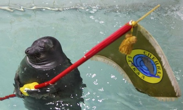 SEALS,ロシアのオットセイの軍事訓練、VEデー 7