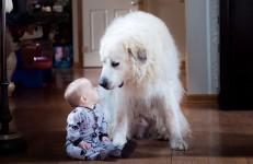 【わんわん】人間の赤ちゃんがお座りを覚えたよ!