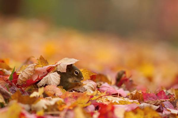 紅葉や秋の森の中を楽しむ動物たちの画像 (31)