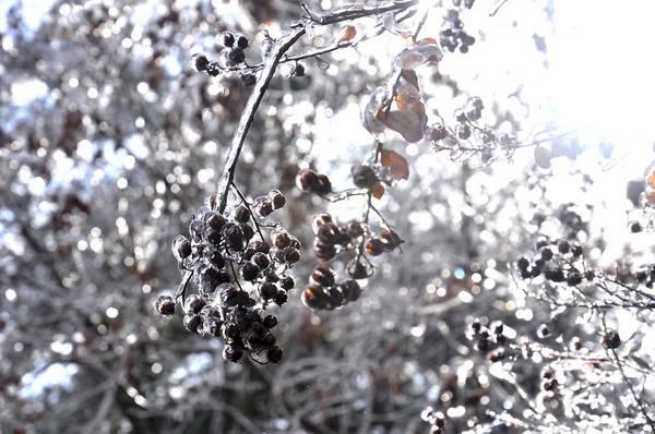 氷霧の後の花2