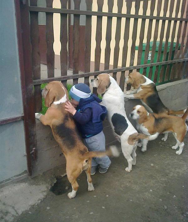 ペットは大切な家族!犬や猫と人間の子供の画像 (32)