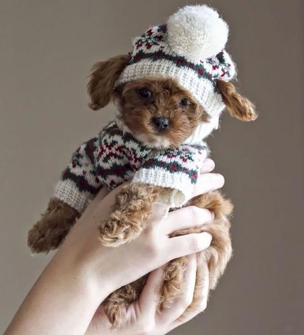 寒いからニットのセーターを小動物に着せてみた画像 (16)
