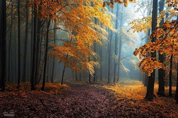 秋といえば紅葉や落葉の季節!美しすぎる秋の森の画像20枚 (14)