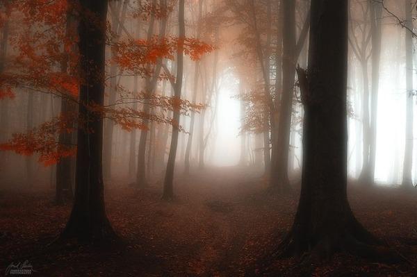 秋といえば紅葉や落葉の季節!美しすぎる秋の森の画像20枚 (8)
