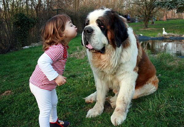 ペットは大切な家族!犬や猫と人間の子供の画像 (90)