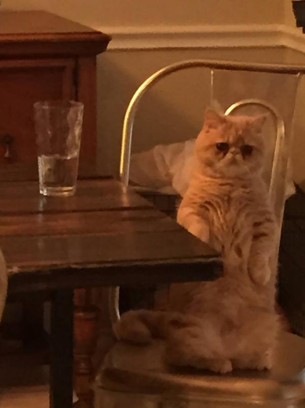 二足で直立する猫 10
