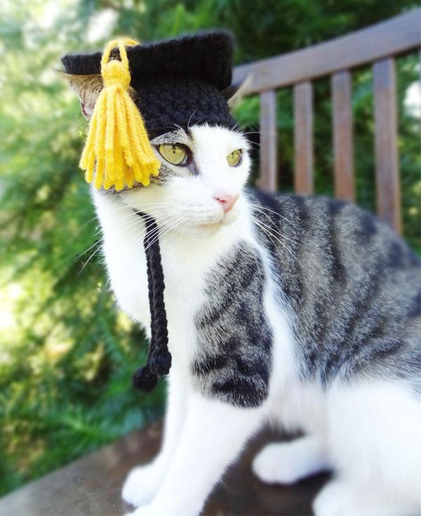 かわいさアップ?猫にぴったりなペット用ニット帽! (7)
