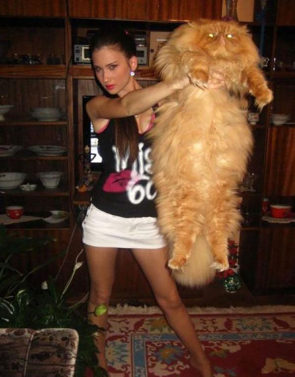 とても大きい猫の画像 24