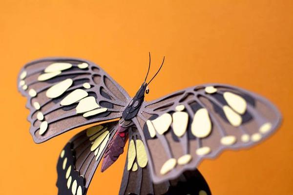 カラフル!リアル!鳥や蝶をモチーフにした紙の彫刻作品 (2)