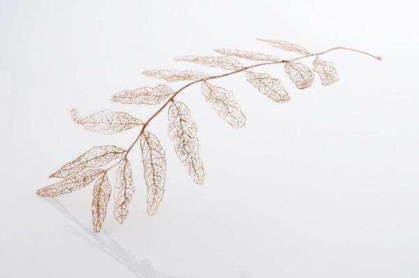超繊細!人間の髪の毛で作るリアルな木の葉 (9)