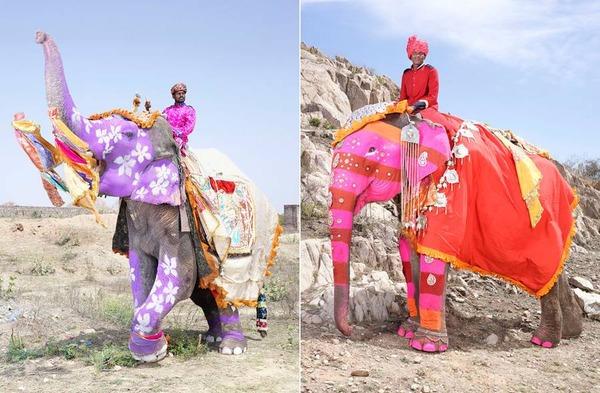 美しく着飾られたゾウの画像!インドの象祭りでメイクアップ (1)
