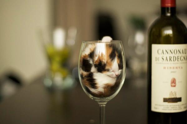子猫ワイン
