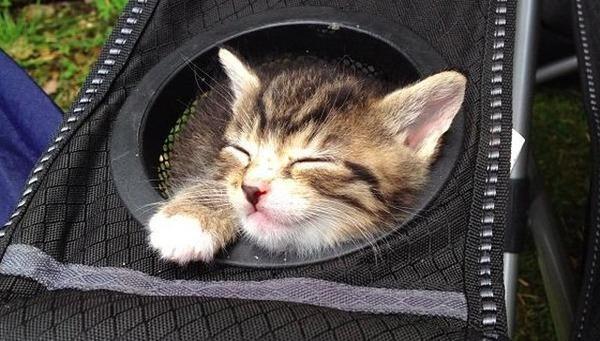 ジャストフィット猫 1