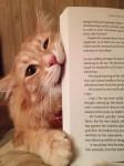 猫の謎を解明?本を読み出すと邪魔してくる猫の行動の真相を入手