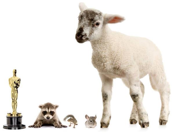 アライグマ、リス、チンチラ、ヒツジの赤ちゃん