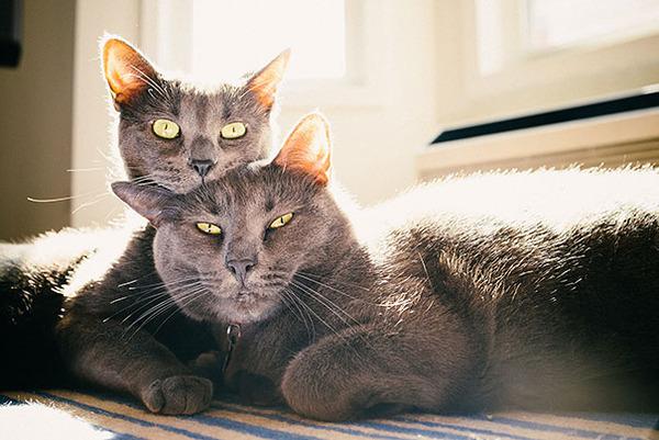 猫のバレンタインデー!【猫ラブラブ画像】 (28)