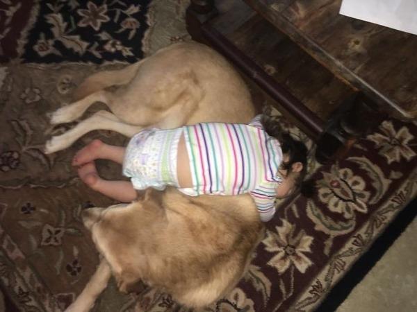 ペットは大切な家族!犬や猫と人間の子供の画像 (41)