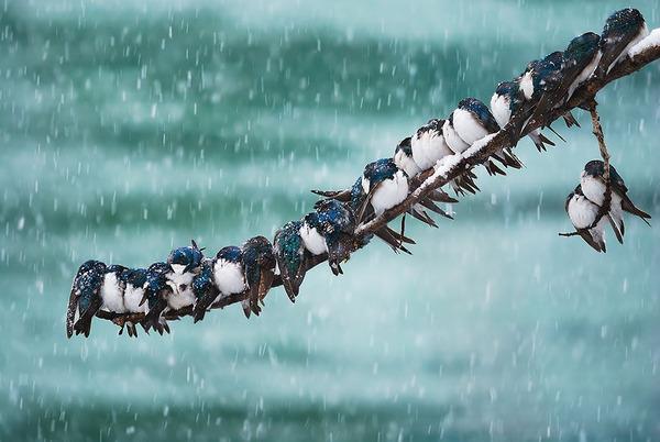 小鳥が温まる為に皆で寄り添っている可愛い画像 (3)