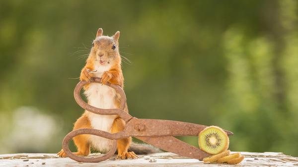 リスってファンタジー!家の裏庭に遊びに来る野生のリスの写真 (5)