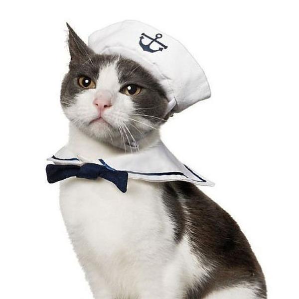 コスプレ猫!ハロウィンだし仮装した猫画像 (13)