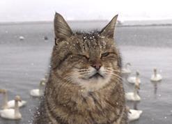 寒さに耐える猫