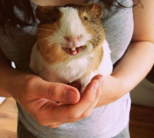 幸せそうな表情を見せる可愛い動物画像19