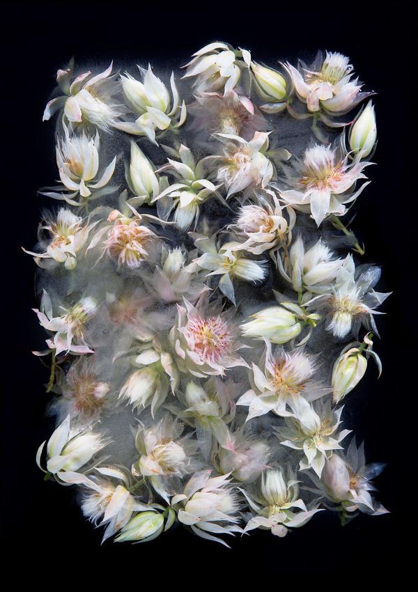 絵画的な美しさ。氷漬けになった花々の写真シリーズ (2)