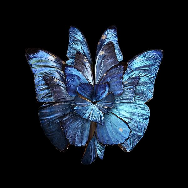 蝶々や昆虫の翅(はね)を合成して作った花の写真シリーズ (9)