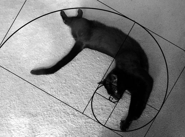 猫と黄金比の関係画像!猫の美しさの秘訣は黄金比にあり (6)