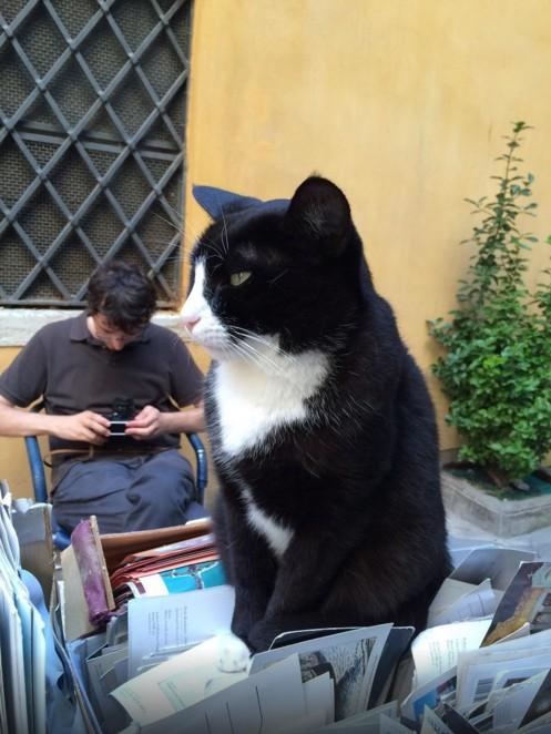 猫の本屋 5
