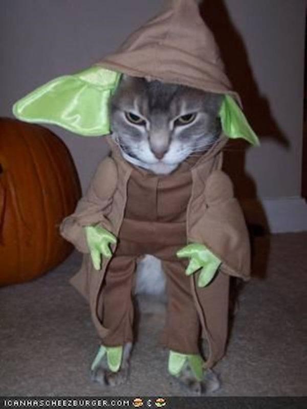 コスプレ猫!ハロウィンだし仮装した猫画像 (2)