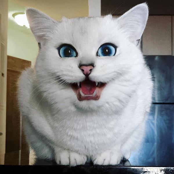 美しい…。綺麗な青い瞳をした白猫が話題!【猫画像】 (13)