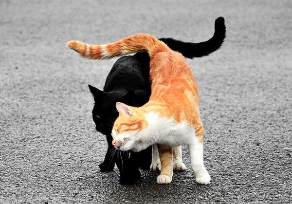 猫のバレンタインデー!【猫ラブラブ画像】 (7)