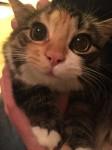 【猫】キラキラ輝く素敵な瞳。まんまるお眼目の猫!