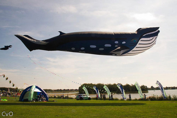 空の水族館!超大きいシロナガスクジラの凧がビーチに浮かぶ (2)