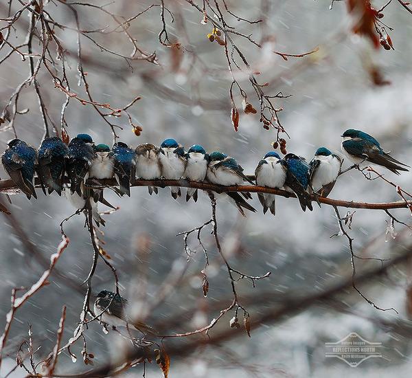 小鳥が温まる為に皆で寄り添っている可愛い画像 (11)
