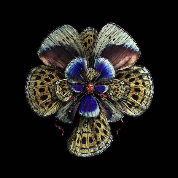 蝶々や昆虫の翅(はね)を合成して作った花の写真シリーズ (7)