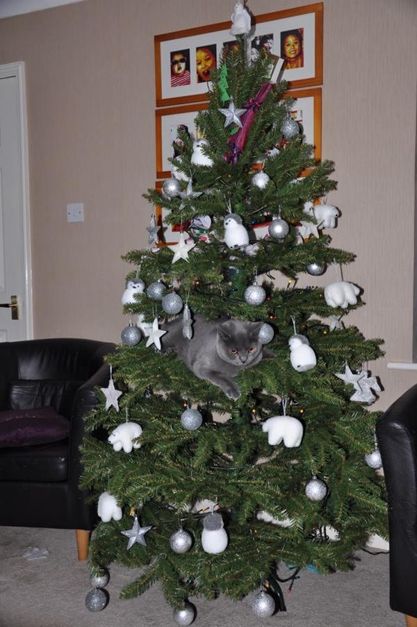 猫、あらぶる!クリスマスツリーに登る猫画像 (30)