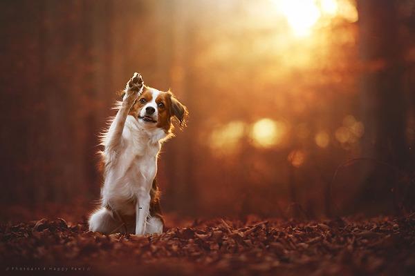 秋が来た!紅葉と遊ぶ犬画像 (6)