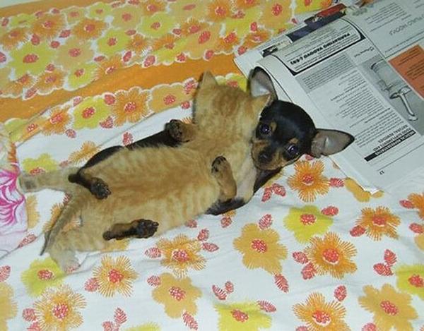 犬と猫のお昼寝 2