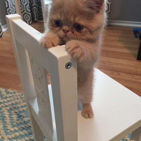 二足で直立する猫 3
