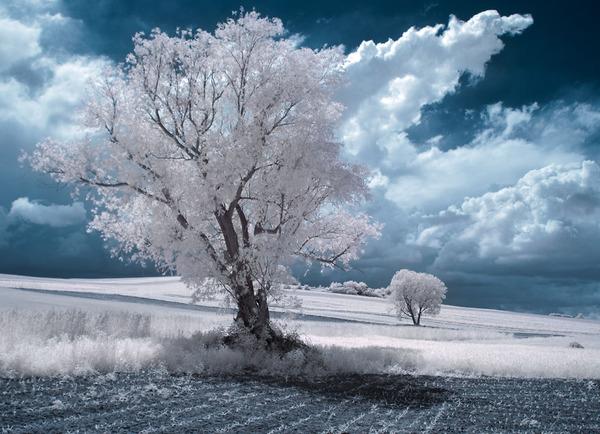 IR(赤外線)カメラで撮影されたポーランドの自然写真が美しい (11)