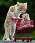 猫アンド子猫!見た目そっくりな仲良し猫ちゃん画像14枚