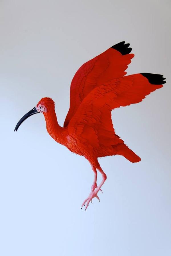 カラフル!リアル!鳥や蝶をモチーフにした紙の彫刻作品 (9)