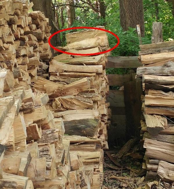猫探し!画像の中に猫が隠れているのを見つけられる? (2)