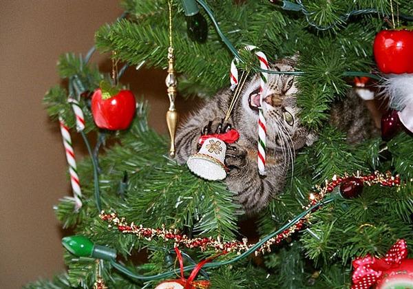 猫、あらぶる!クリスマスツリーに登る猫画像 (13)