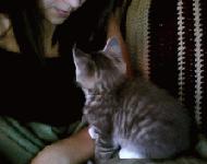 子猫からキュートなキスのプレゼント