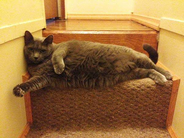 モデルのようにポーズを取る可愛い動物特集 猫 8