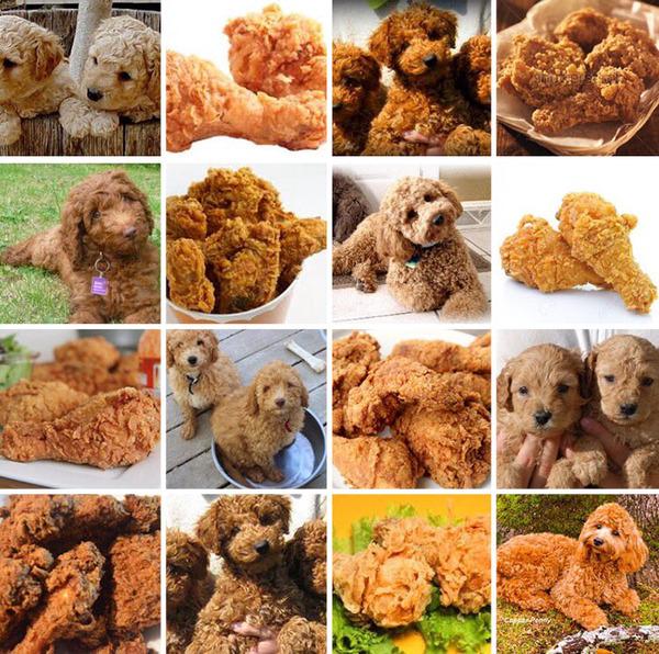 何かとそっくりな犬の比較画像 (7)